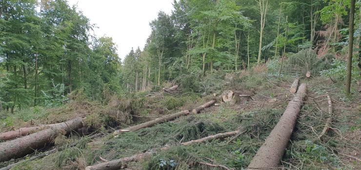 Käferbäume und Totholz - wie geht man sinnvoll damit um?