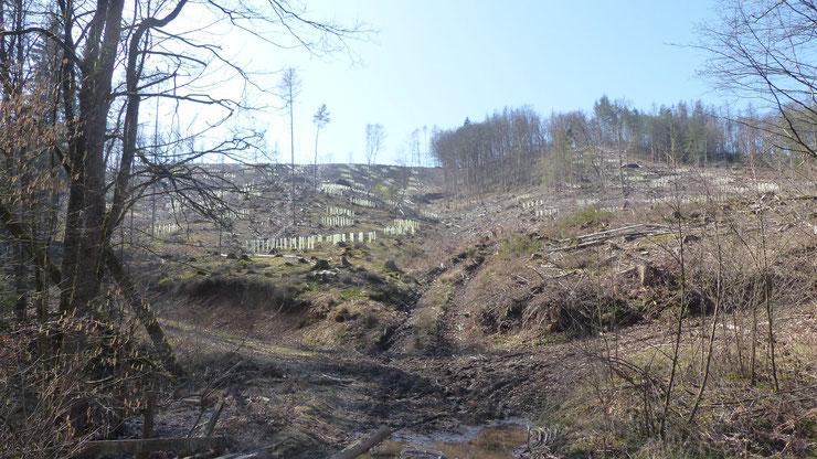 Landeswald in Windeck, Bildrechte BUND Kröfges