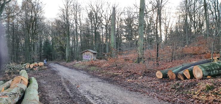 Rund um die Hütte konnten Wanderer früher entspannt im Schatten den Wald genießen. Das ist vorbei und der nächste heiße Sommer kommt bestimmt.