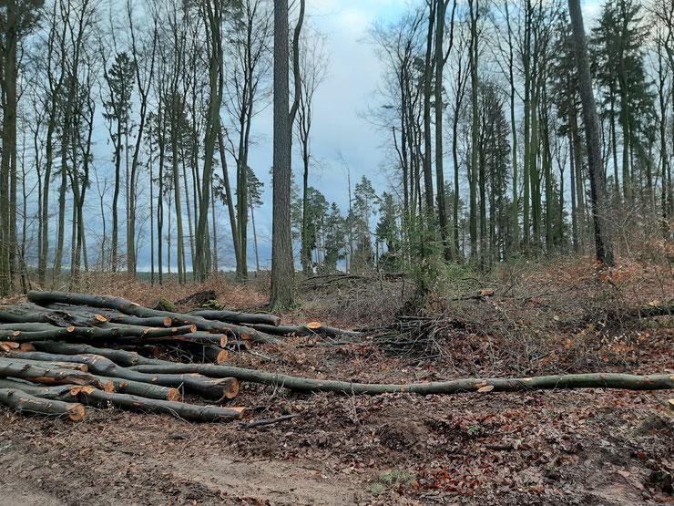Pfälzerwald, Dezember 2019