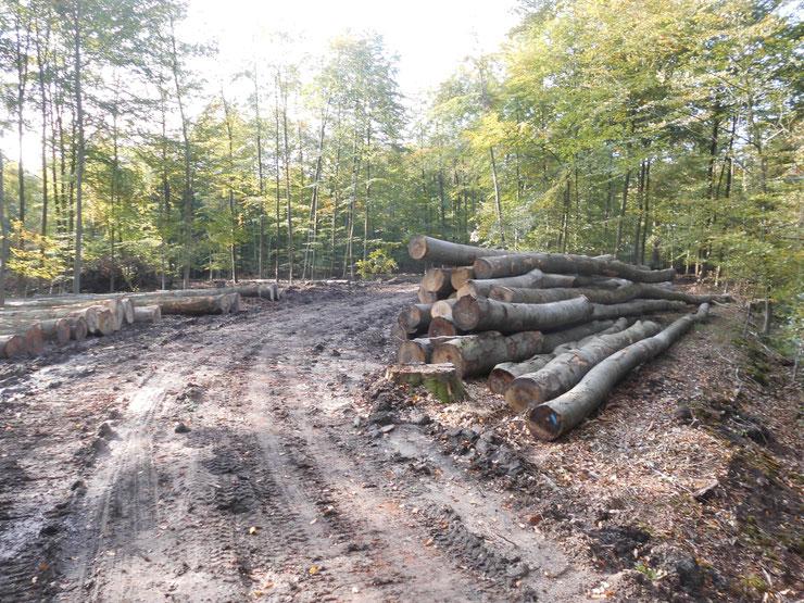 Wald-Zerstörung-Asbeck-14-10-2019