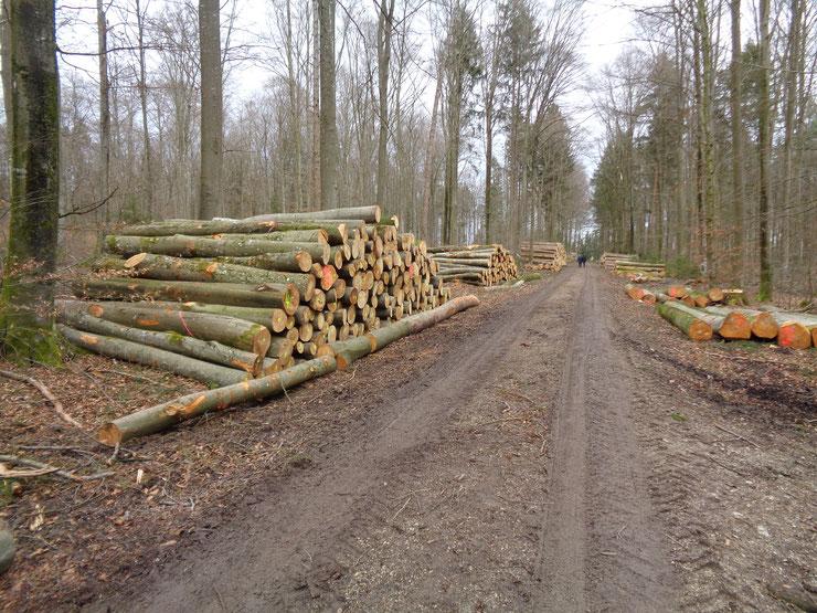 Buchenernte Winter 2019/2020 im Haunstettener Forst