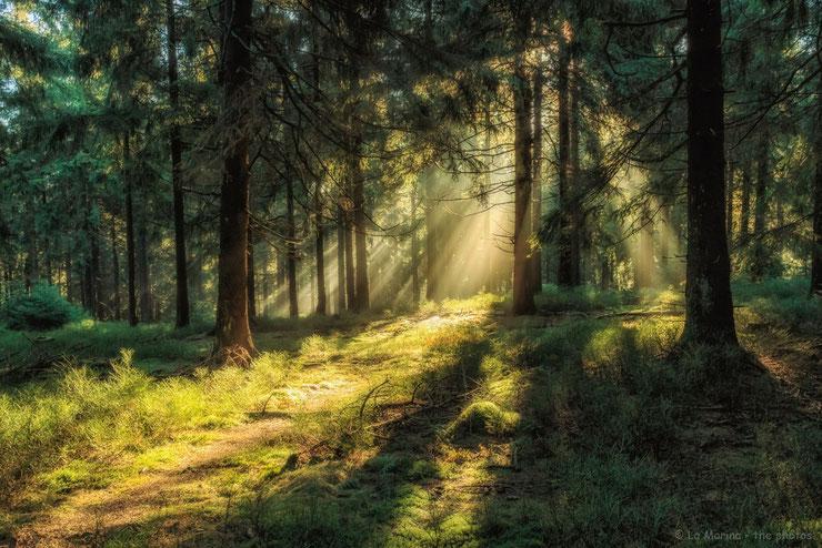 Morgenlicht im Harz