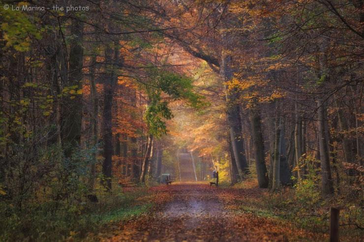 Herbststimmung in der Seelhorst