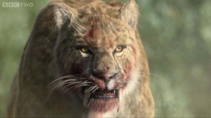 smilodon tigre dent de sabre prehistorique saber toothed tiger