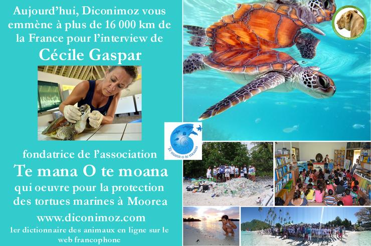 interview association te mana te moana protection des tortues marines et des milieux marins polynesiens moorea