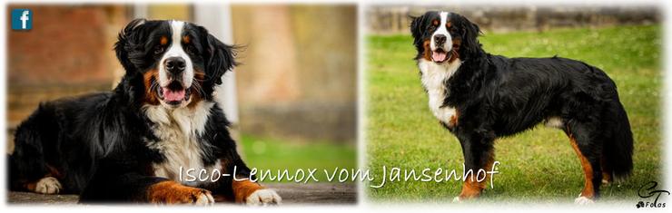 Deckrüde Isco-Lennox vom Jansenhof