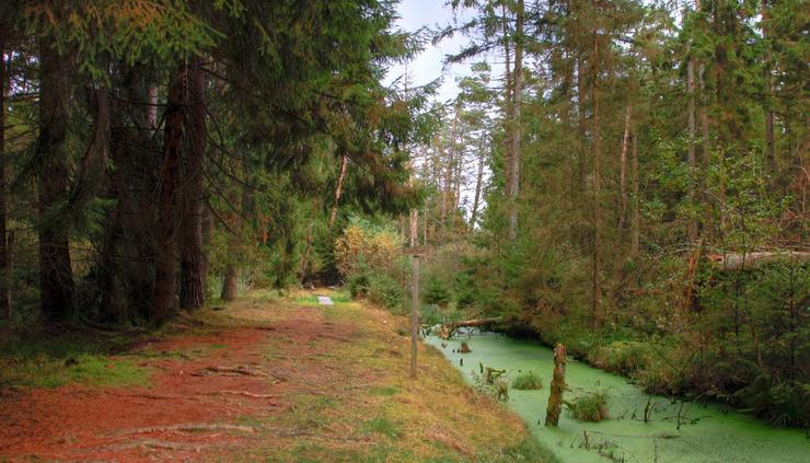 ... Wurzelpfad im Wettenberger Ried mit seinem ganz eigenen Flair und Schönheit ...