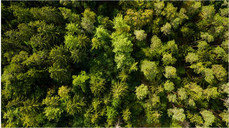 Muna Wald Baumkronen - vielfältiger gesunder Mischwald