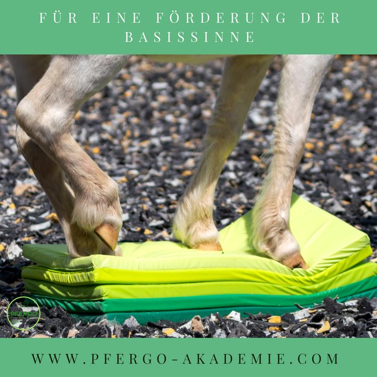 Sensorische Integration beim Pferd: Förderung der Basissinne durch Pferdeergotherapie