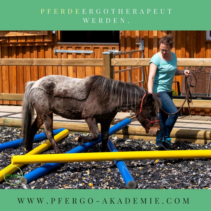 Pferdeergotherapeuten schulen die Basissinne des Pferdes: Das taktile, vestibuläre und propriozeptive System werden gefördert.
