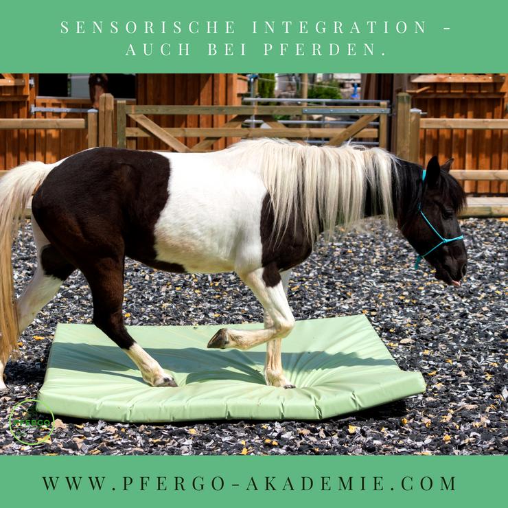 Sensorische Integration bei Pferden: PFERGO Pferdeergotherapie - die Basissinne des Pferdes fördern und trainieren.