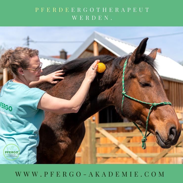PFERGO Pferdeergotherapeut werden und Pferde sinnvoll fördern und trainieren! Balance, Gleichgewicht, Koordination und Konzentration fördern - Basissinne schulen