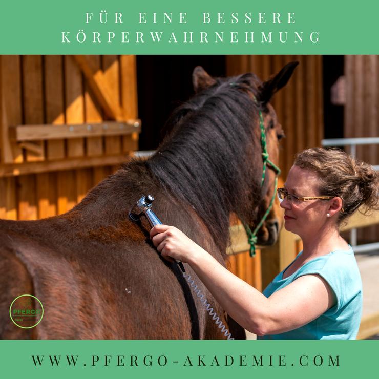 Ergotherapie für Pferde - Pferdeergotherapie