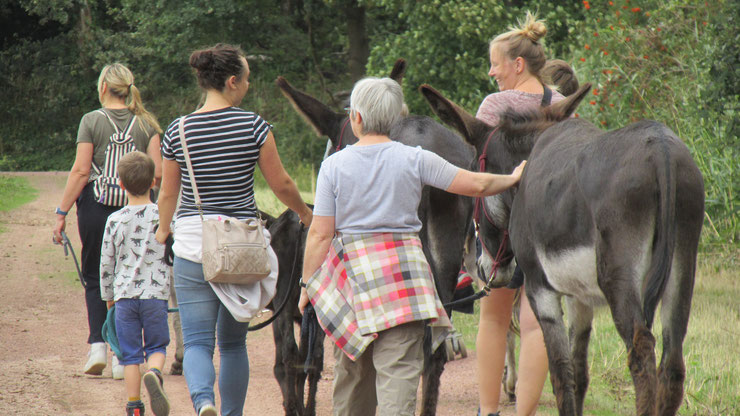 Ezelwandeling Egotherapie met assistentie van Dieren ezels in Duffel