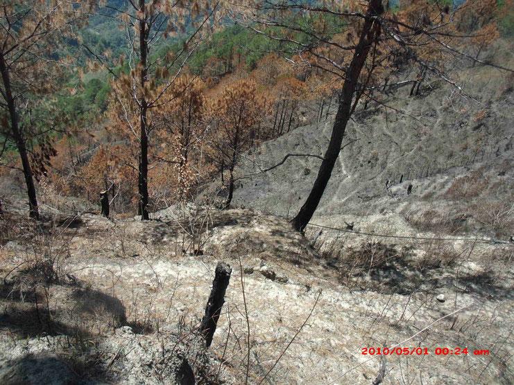 山火事で焼失した植林地