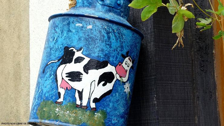 Vache normande heureuse, Normandie