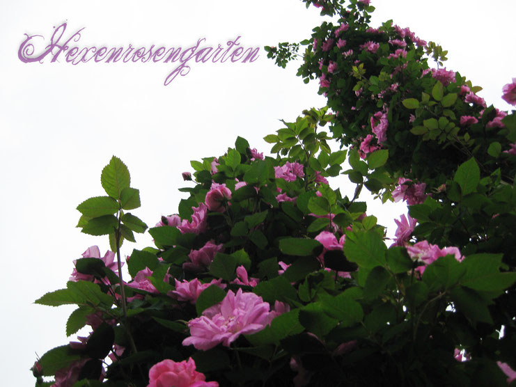 Europa Rosarium Sangerhausen Rosen Rosensäulen