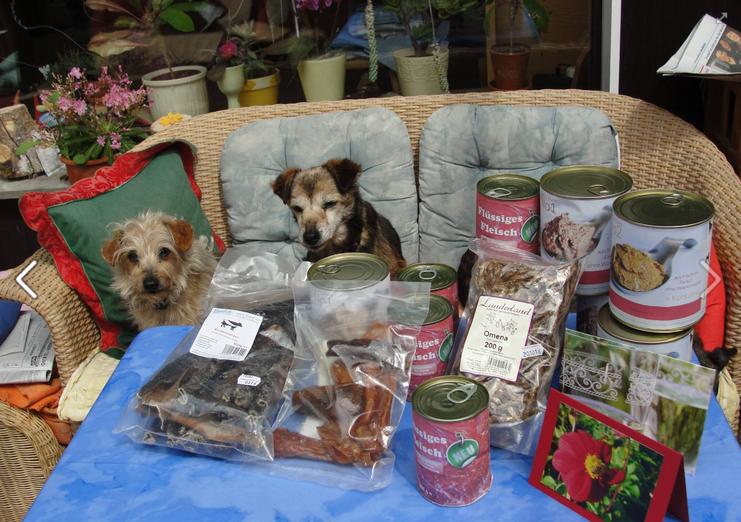 Hunde-Hospiz, Senioren Hunde