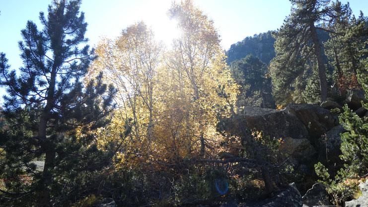 couleurs d'automne du côté du vallon de Pouey Trénous