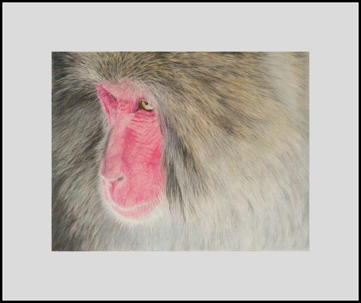 Tierzeichnung,Affe,Farbstiftzeichnung