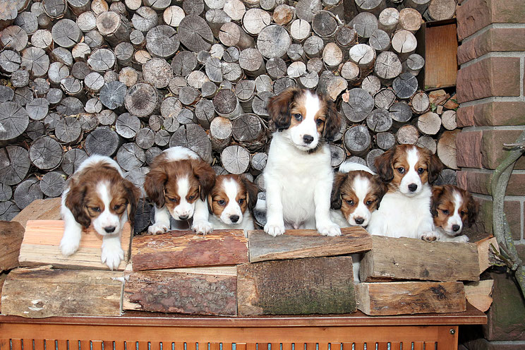 Puppy 5, Puppy 4, Puppy 6, Puppy 3, Puppy 7, Puppy 2, Puppy 1