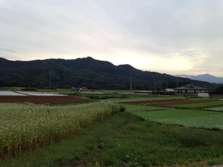 御代田の畑