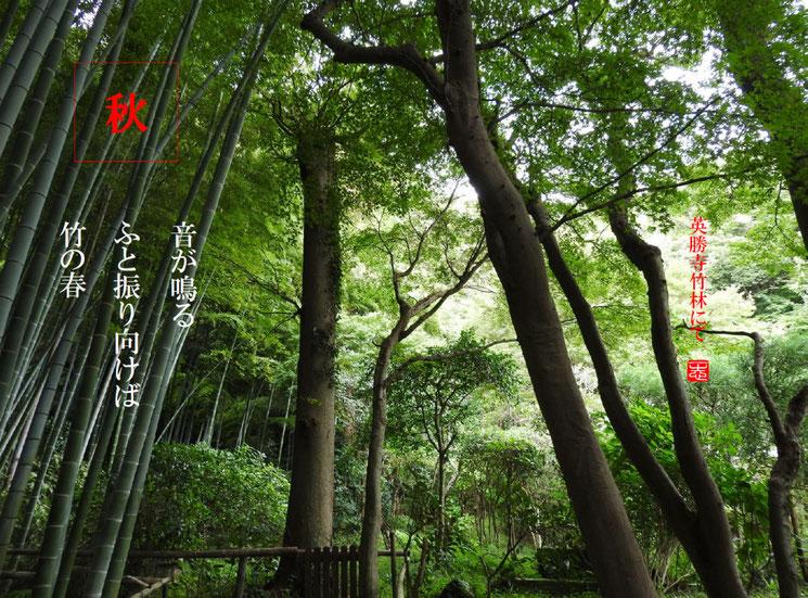 音が鳴るふと振り向けば竹の春  竹林(ちくりん)鎌倉英勝寺 竹林 160907撮影