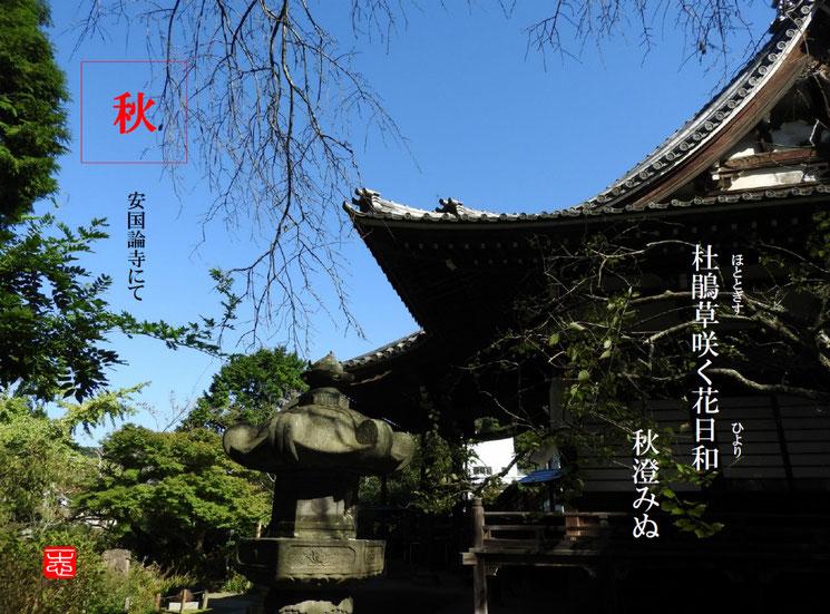 杜鵑草咲く花日和秋澄みぬ  杜鵑草(ほととぎす)鎌倉安国論寺 161015撮影