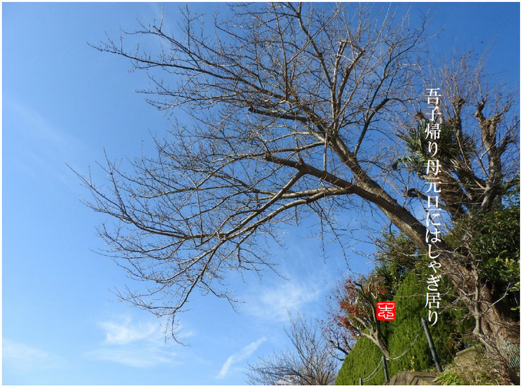 吾子帰り母元旦にはしゃぎ居り 2017/01/01作句 170102撮影