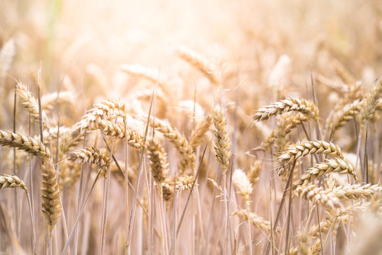 Getreide Gluten Weizen Kinderwunsch Zöliakie Unfruchtbar schwanger werden