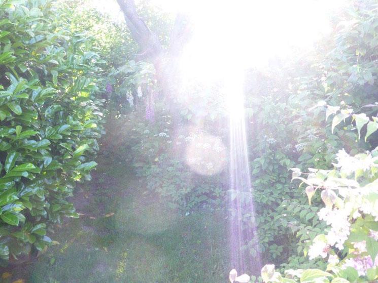 Morgengruß, Quelle: www.lichtwesenfotografie.com