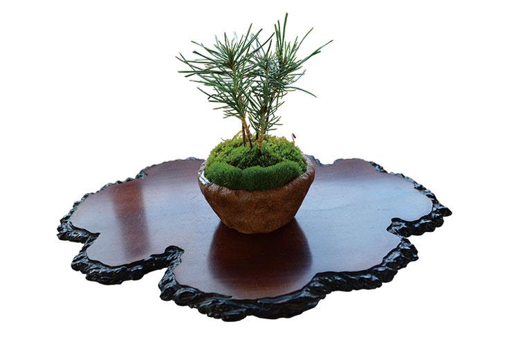 実生から育てた松柏や国産赤玉土など、確かな素材を使って生命力あふれる盆栽をつくります。