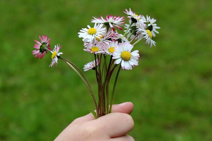 Lieber glücklich mit Gefühlen - Gänseblümchen (Fotoquelle: pixabay.com @_Alicja_)
