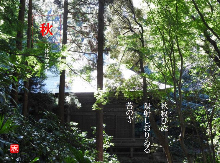 秋寂びぬ陽射しおりゐる苔の寺  苔寺(こけでら)鎌倉妙法寺 161015撮影
