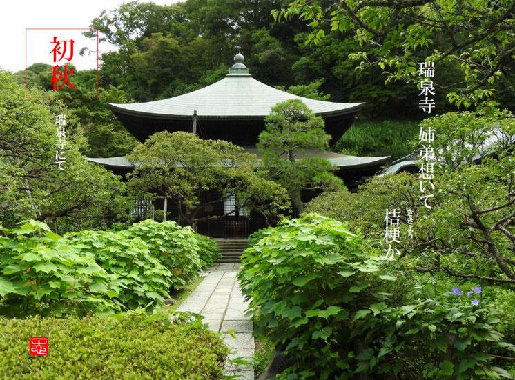 桔梗(ききょう) 鎌倉瑞泉寺 160728撮影