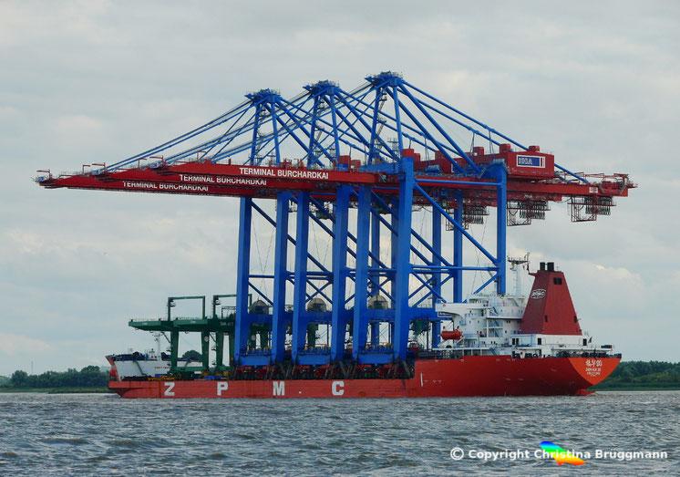 Deckcarrier ZHEN HUA 20 mit Containerbrücken für den Burchardkai, Hamburg, auf der Elbe, 14.08.2016