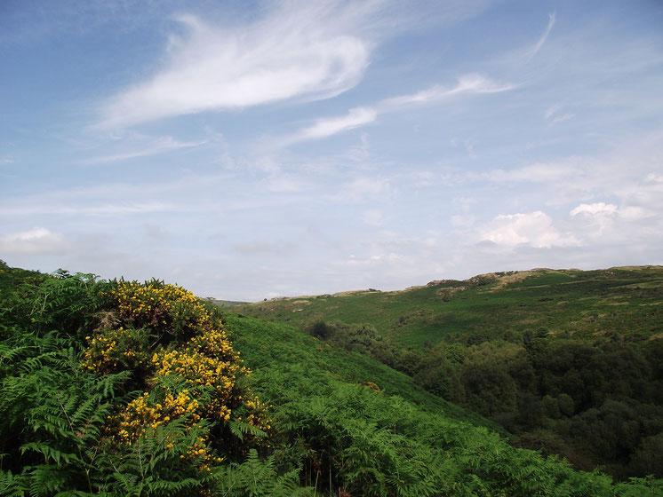 Dartmoor, Devon, England