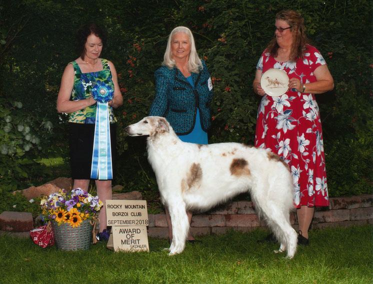 Barsoihündin aus eigener Nachzucht! Wir züchten Barsois und Deerhounds mit FCI Papieren! Erfolgreiche Barsois und Deerhounds in Deutschland!