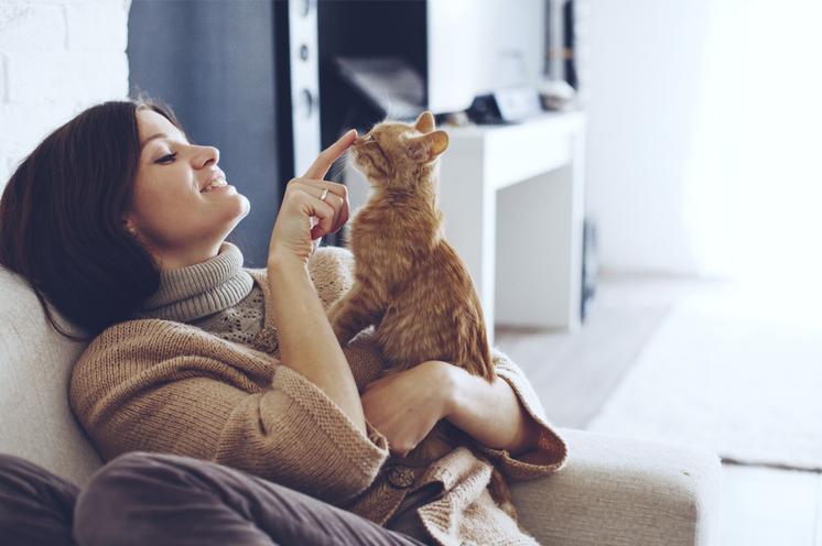 Spielen Sie mit Ihren Haustieren und nicht mit Ihrem Haus!
