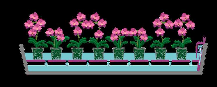 arrosage orchidée connecté avec OriCine sur mesure