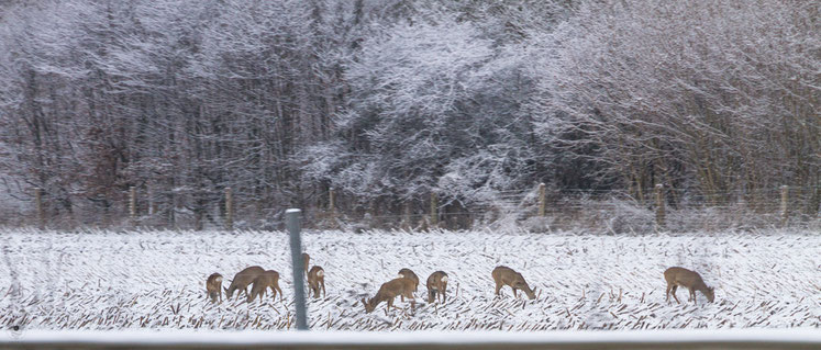 projekt flyinglandscapehamburger rehe im winter | www.visovio.de fotografie und fotokunst |  rehe autobahn dieruheweg schnee feld