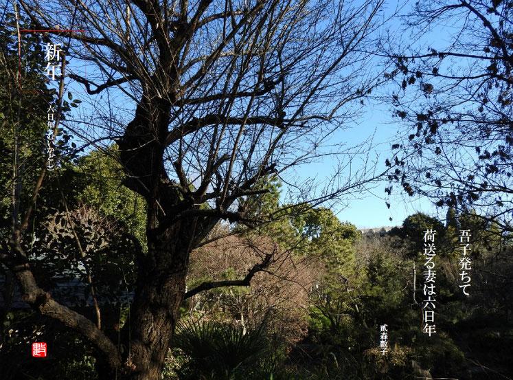 吾子発ちて荷送る妻は六日年 2018/01/06作句 180102撮影