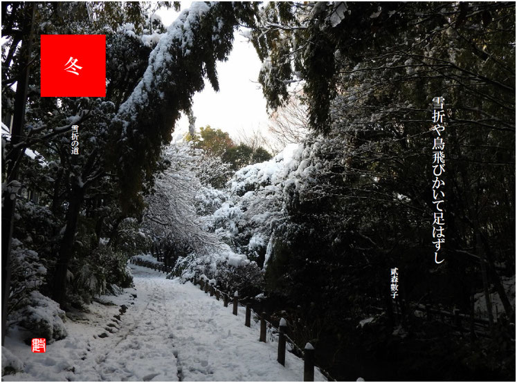 雪折(ゆきおれ) 2018/02/04作句  雪の親水緑道で