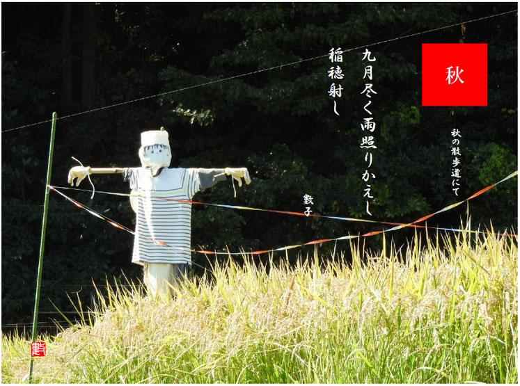 稲穂(いなほ) 2018/10/05作句 散策路子供体験たんぼにて