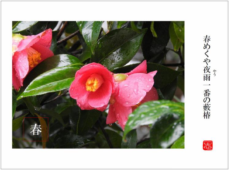 藪椿(やぶつばき)始まりの句  自宅庭 2016/03/19作句 撮影
