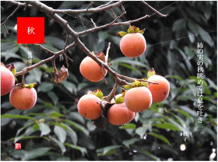 柿の実の秋眺めては息を吐き 2018/10/22作句 散策路にて