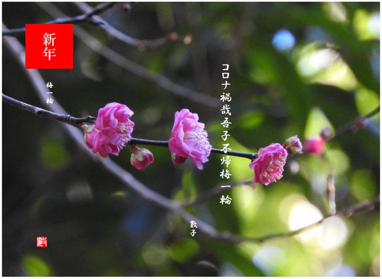 2021/01/02作句 親水緑道の紅梅 2021/01/02撮影