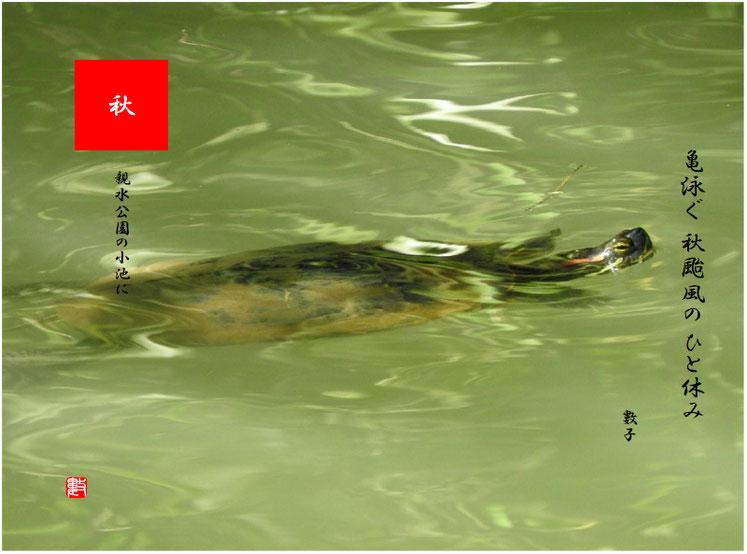秋颱風(あきたいふう) 2018/10/06作句 親水公園の小池にて