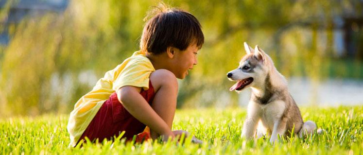 Niño_jugando_con_perro